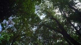 美丽的森林,低角度,上面蓝天移动的英尺长度有绿色树的,有夏天太阳光芒的森林淡光 股票视频