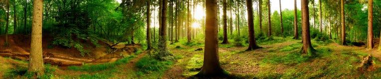 美丽的森林
