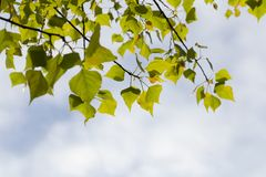 美丽的森林 免版税图库摄影