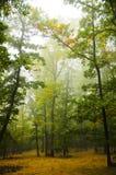 美丽的森林 库存图片