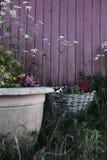 美丽的植物和花在大罐在一个庭院里在红色木篱芭旁边 库存图片