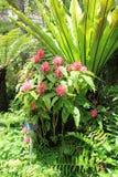 美丽的植物和花在显示,巴波亚植物园,圣地亚哥,加利福尼亚, 2016年 免版税库存图片