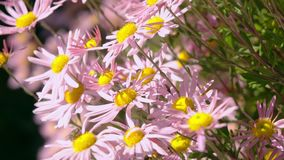 美丽的植物在庭院里增长 影视素材