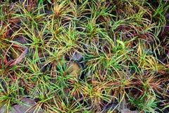 美丽的概念保护夫妇环境绿色重点叶子草甸安置了红色春天 免版税图库摄影