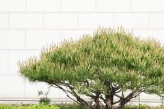 美丽的概念保护夫妇环境绿色重点叶子草甸安置了红色春天 免版税库存图片