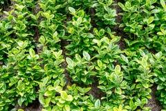 美丽的概念保护夫妇环境绿色重点叶子草甸安置了红色春天 免版税库存照片