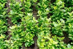 美丽的概念保护夫妇环境绿色重点叶子草甸安置了红色春天 图库摄影