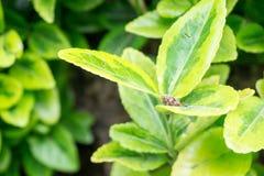 美丽的概念保护夫妇环境绿色重点叶子草甸安置了红色春天 库存照片