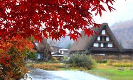 美丽的槭树叶子在Shirakawago村庄 库存图片