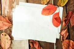 美丽的槭树在葡萄酒留给木与老纸 库存图片