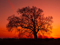 美丽的横向剪影结构树 免版税库存照片