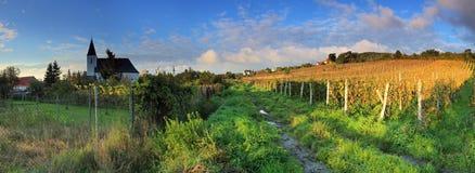 美丽的横向葡萄园 库存图片