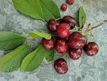 美丽的樱桃在桌上和在茶碟 樱桃和樱桃核,在板材挖坑 免版税图库摄影