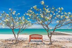美丽的橙色海椅子 库存图片