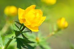 美丽的橙色花蕾在庭院里-地球花 库存照片