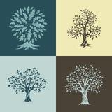 美丽的橡树剪影 库存照片