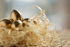 美丽的欢乐金黄鹌鹑蛋,复活节背景 库存照片