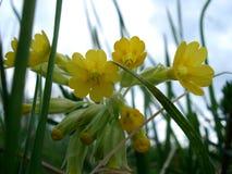 美丽的欧洲花可以本质onobrychis pratensis salvia春天viciifolia 免版税库存图片