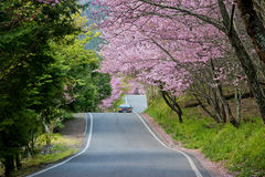 美丽的武陵农场台湾 免版税库存照片