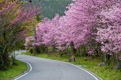 美丽的武陵农场台湾 免版税库存图片