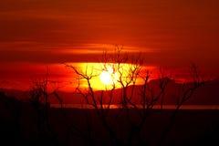 美丽的死海日出结构树 免版税库存图片