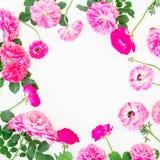美丽的毛茛属圆的框架开花,玫瑰和叶子在白色背景 平的位置,顶视图 花卉生活方式compositio 免版税库存图片