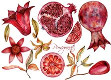美丽的水彩设置了用石榴果子和花  免版税图库摄影