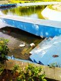 美丽的池塘和鸭子是很好神色 免版税库存照片