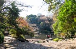 美丽的池塘在东京大学里面的庭院里 老人喜欢走和放松 库存照片