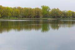 美丽的池塘在夏天公园 免版税图库摄影