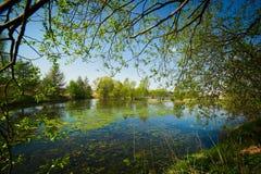 美丽的池塘秘密小的天鹅 免版税图库摄影