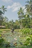 美丽的池塘 库存照片