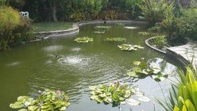 美丽的池塘 免版税图库摄影