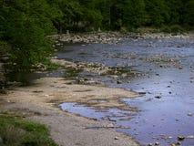 美丽的河通过峡谷跑,并且森林,山树有很多 免版税库存照片