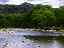 美丽的河通过峡谷跑,并且森林,山树有很多 库存照片