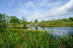 美丽的沼泽河在夏天 库存图片