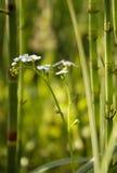 美丽的沼泽花 免版税库存照片