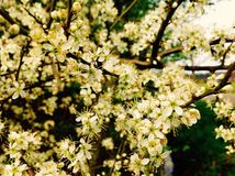 美丽的沿路的开花野花 库存图片