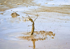 美丽的泥飞溅 免版税库存图片