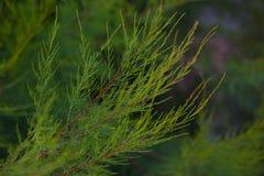 美丽的泰国灌木 免版税库存图片