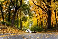 美丽的浪漫胡同在有五颜六色的树的一个公园,秋天l 图库摄影