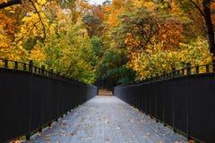 美丽的浪漫胡同在有五颜六色的树的一个公园,秋天l 免版税库存照片