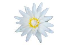 美丽的浪端的白色泡沫百合 图库摄影