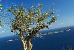 美丽的海岸视图villasimius 库存图片