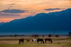 美丽的海湾马牧群在山吃草在日落,惊人的行家晴朗的自然本底 库存图片