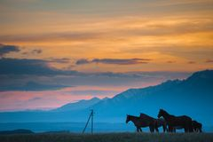 美丽的海湾马牧群在山吃草在日落,惊人的行家晴朗的自然本底 库存照片