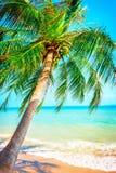 美丽的海滩 在两棵棕榈树之间的吊床在海滩 库存图片