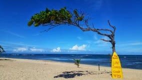 美丽的海滩 免版税库存图片