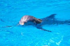 美丽的海豚水 免版税库存照片