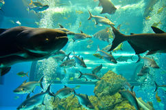 美丽的海鱼特写镜头  免版税库存图片